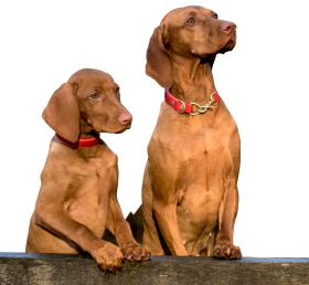 Two Dogs PNG