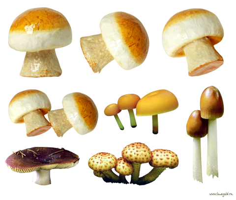 Variety of Mushrooms PNG
