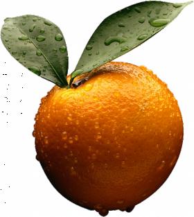 Wer Orange PNG
