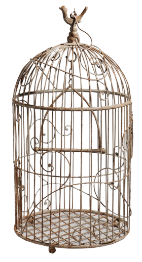 White Bird Cage PNG