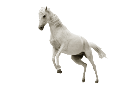 White Horse Jumping PNG