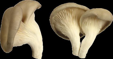 White Mushroom PNG