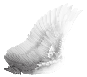 Wings White PNG