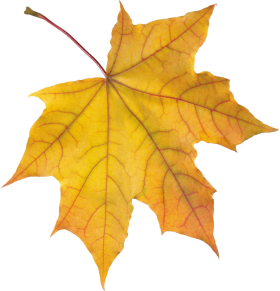 Yellow Autumn Leaf PNG