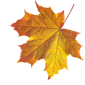 Yellow Autumn Leaves PNG