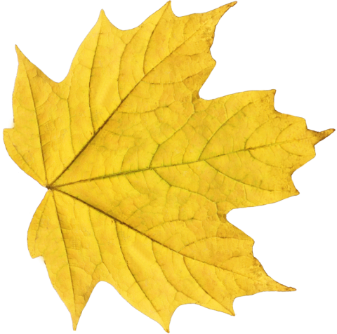 Yellow Leaf PNG