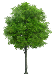 Leafy Wood Tree PNG