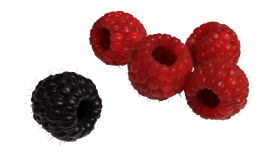 Red and Black Raspberry PNG