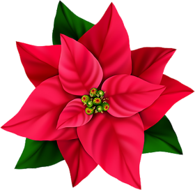 Red Flower PNG