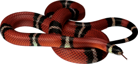 Red Snake Lying On The Ground PNG