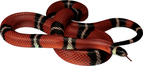 Red white black Snake PNG
