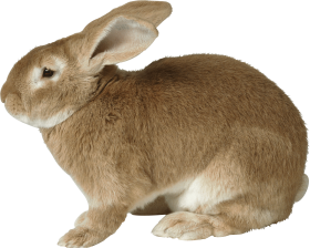 sad brown rabbit PNG