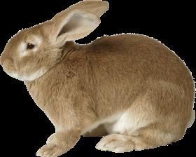 sad brown rabbit PNG