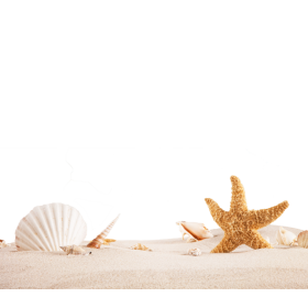 Sea Shells and Star Fish PNG