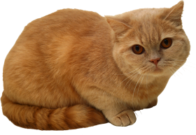 Sitting Cat PNG PNG