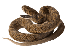 Snake with opened Mouth PNG