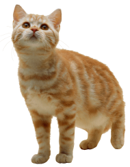 Sweet Cat Kitten PNG PNG