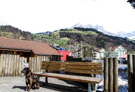 Dog Chained to a Bench - Switzerland PNG