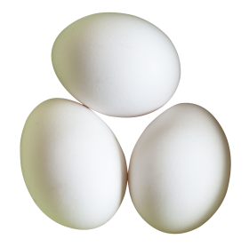 Three White Eggs PNG