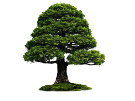 Large Tree With Grass PNG