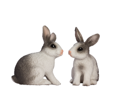 Two Rabbits PNG