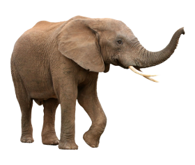 Walking Elephant PNG
