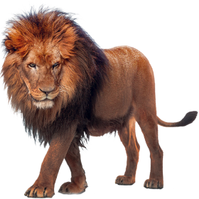 Walking Lion PNG
