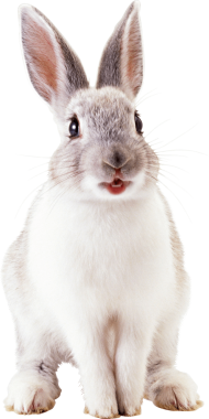 white cute rabbit PNG