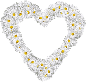 White Flowers Heart PNG