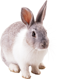 white gray rabbit PNG