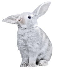 white rabbit with huge ears PNG