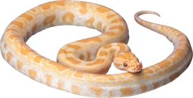 Yellow Snake PNG
