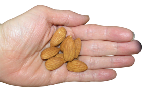 Almonds in palm