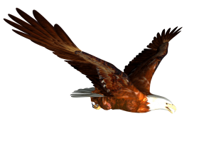 animated Bald eagle Flying