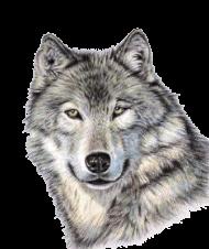 Cute Wolf Face