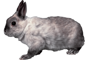 grey rabbit sideview