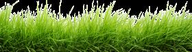 Line Of Grass