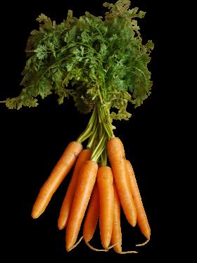 Orange Carrots with Stem