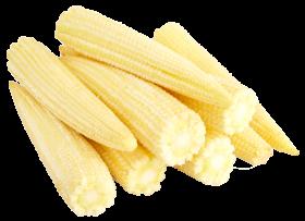 Baby Corn Cobs