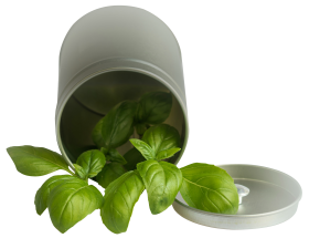 Basil Leaf Pot