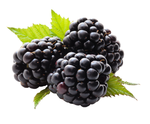 Blackberry Variations