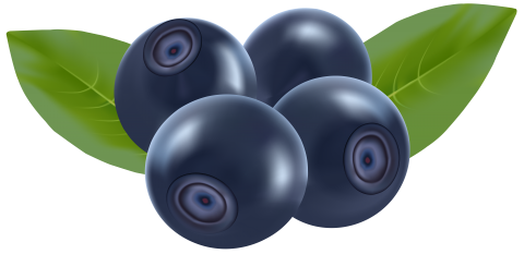 Blueberry drawing