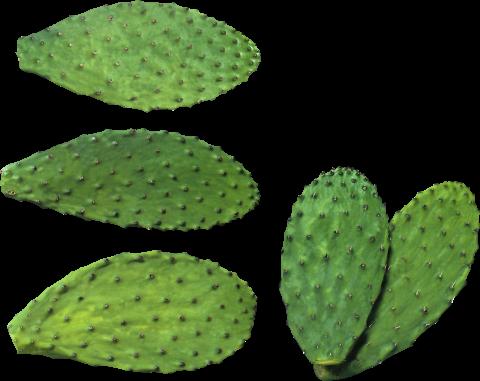 Cactus Plates