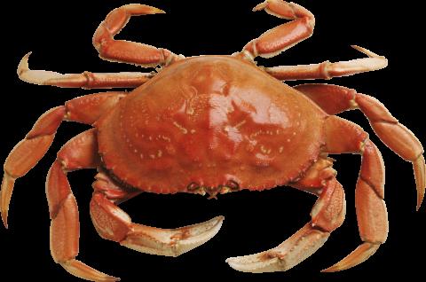 crab_PNG9