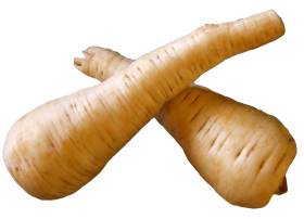 Fresh Parsnip Root