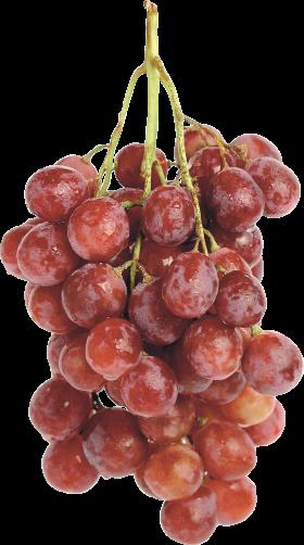 Grapea