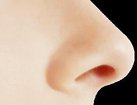Human Nose