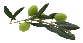 Olive With Leaves