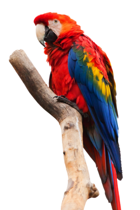 Parrot Sitting On A Stick