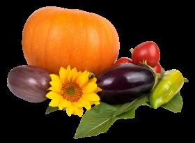 Pumpkin Tomato Pepper Eggplant